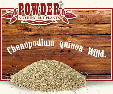 POWDER - QUINOA BIO