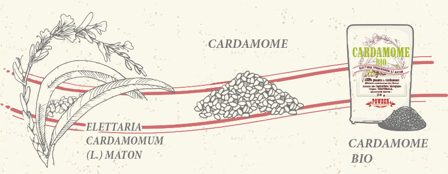 CARDAMOMO BIO POWDER